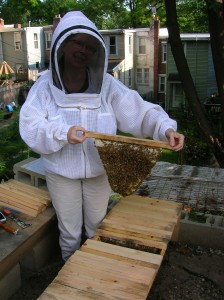 Bee-built comb from one of our top bar hives.